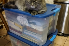 Mr. Ripples enjoying the boxes