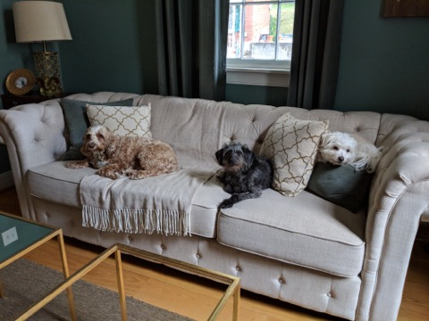 Charlie, Sophie, and Bonnie